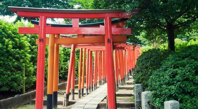 Piccola serie di Torii all'interno del santuario Nezu, Tokyo, Giappone