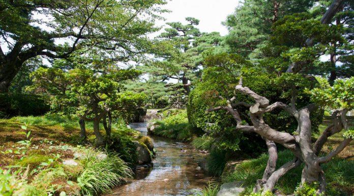 Torrente nel giardino Kenrokuen, Giappone