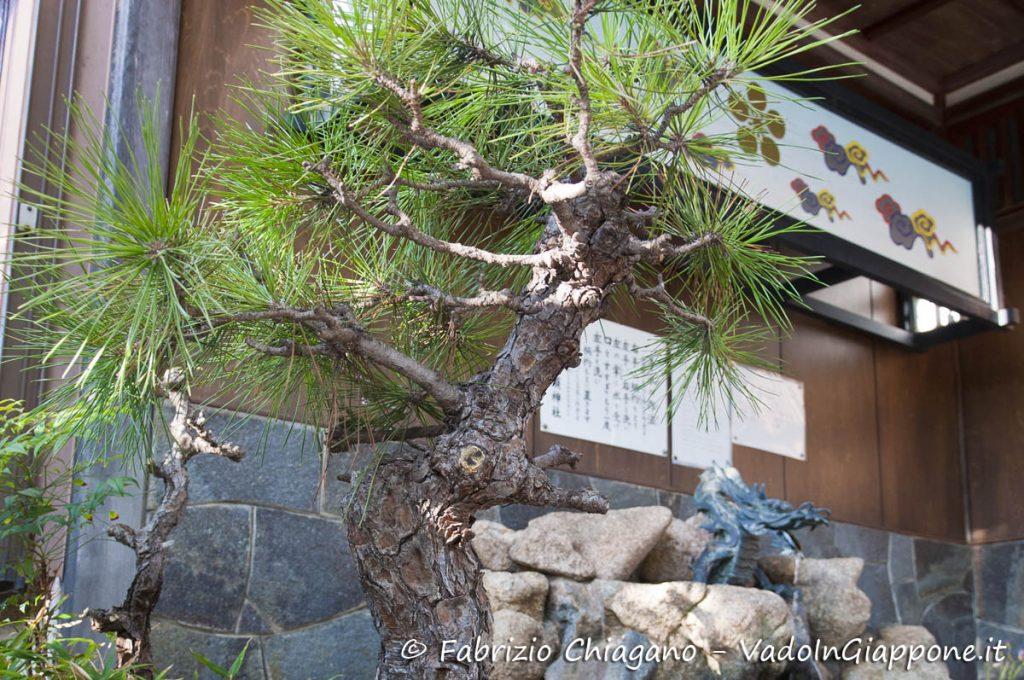 Bonsai lungo una stradina di Utatsuyama, Kanazawa, Giappone
