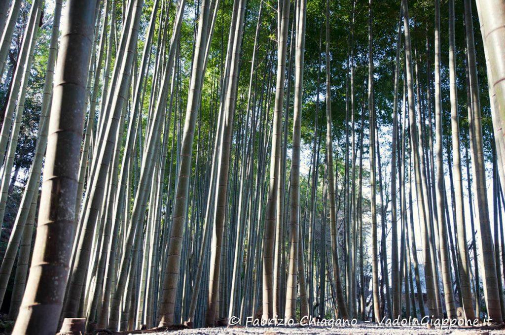 Piccola foresta di bambù all'interno del Tempio Enkoji