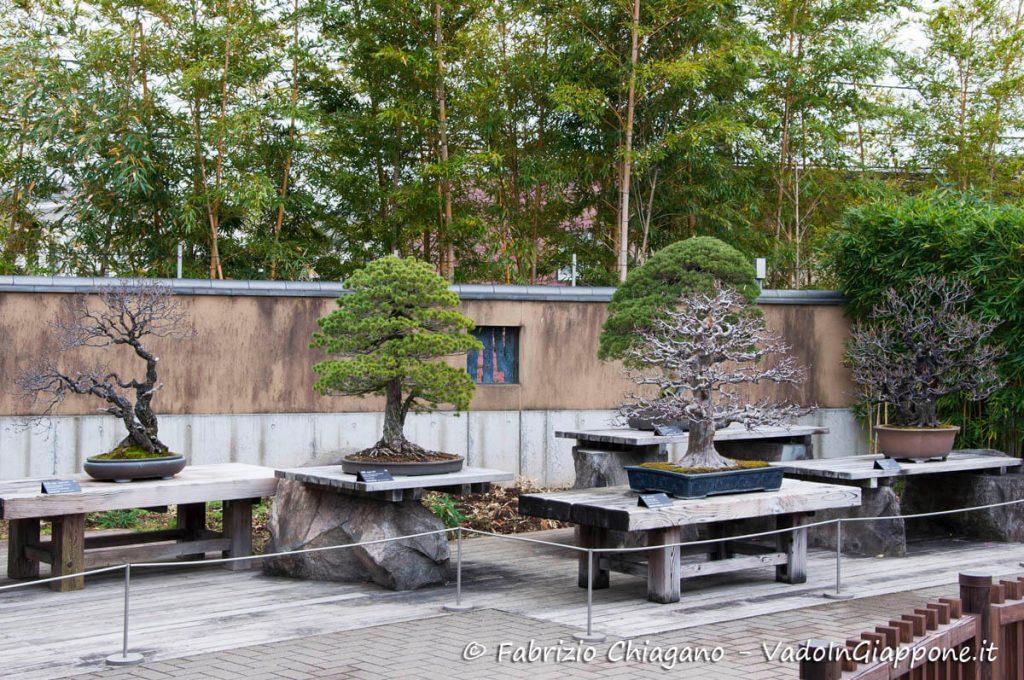 Panoramica del giardino del Museo dei Bonsai di Omiya, Giappone