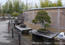 Museo dei Bonsai di Omiya, Omiya, Saitama, Giappone