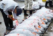 Prima asta dei tonni del nuovo anno a Tokyo