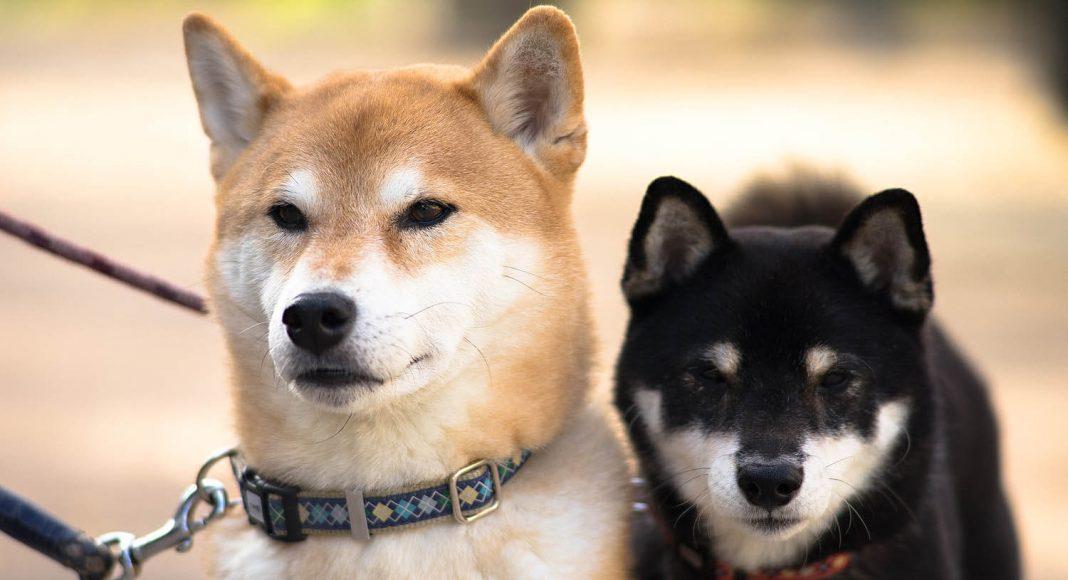 Le razze di cane giapponesi