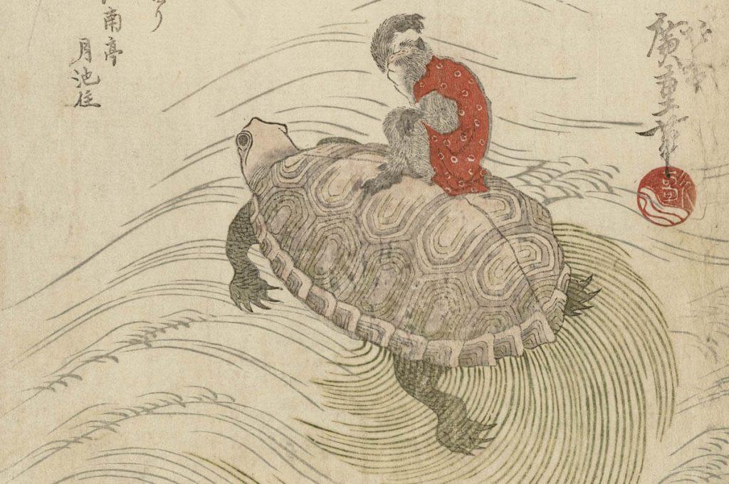 Minogame: la tartaruga col mantello